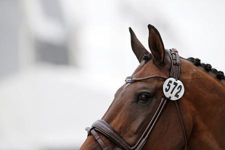 horse show: Equestrian photo