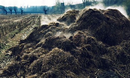 muck: Heap of cow-dung in the Piedmont countryside