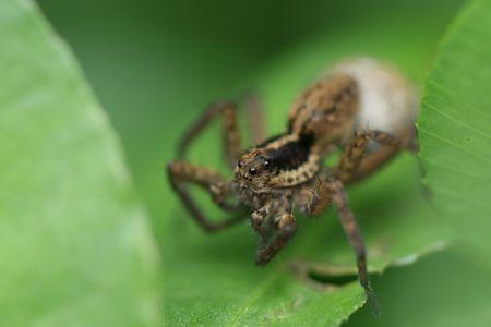 latent: Spiders Stock Photo