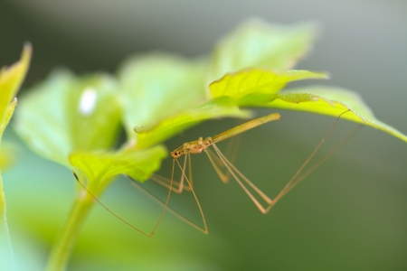 Insect Stock Photo - 13946591