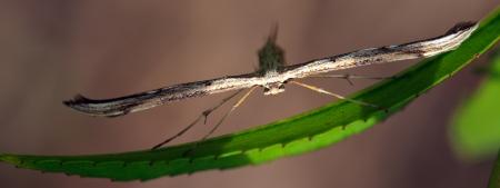 insecta: Alien species Stock Photo