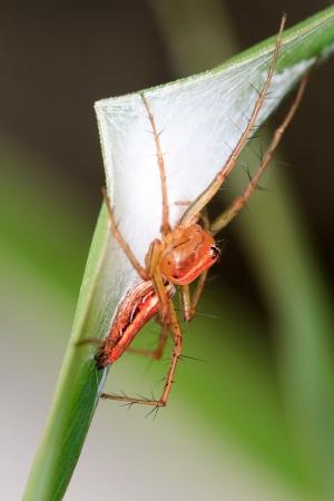 Spider Stock Photo - 14413513