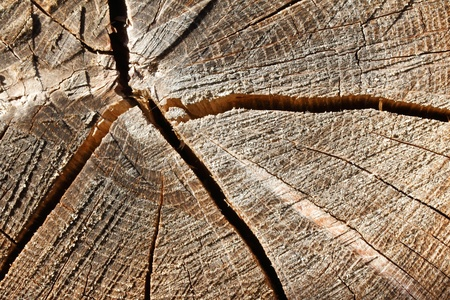 subsoil: Wood. A cross section by a trunk. Stock Photo