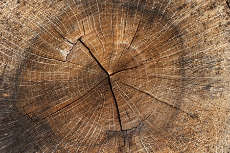 printed matter: Wood. A cross section by a trunk. Stock Photo