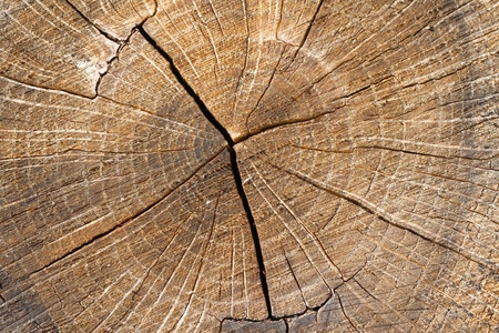 shade: Wood. A cross section by a trunk. Stock Photo