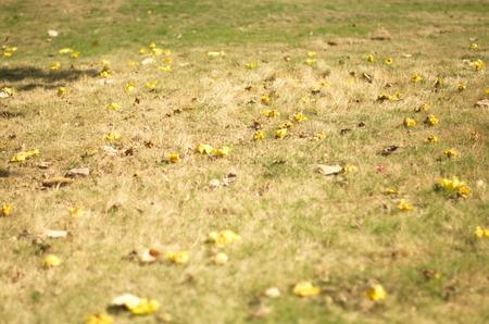 the humanities landscape: field