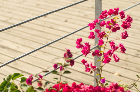the humanities landscape: Flowers and trestle Stock Photo