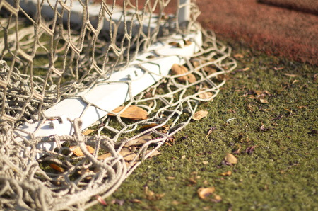 the humanities landscape: nets with dry leaves