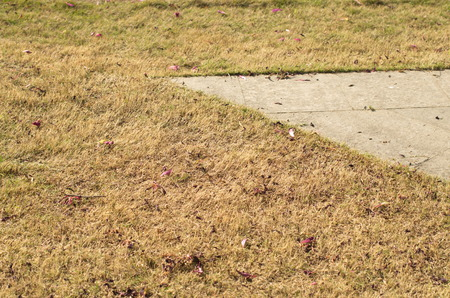 the humanities landscape: Lawn