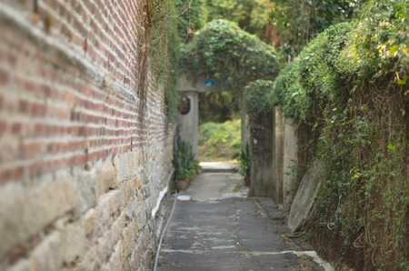 the humanities landscape: Ivy Wall