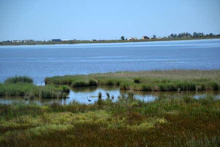 plantas acuaticas: Ver En Las plantas de agua y el agua en el delta del r�o Ebro en Espa�a