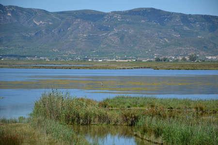Nature Of The Delta the Ebro in Catalonia Spain photo