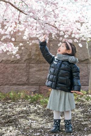 Baby girl enjoys the Cherry Blossom and the sunshine. Standard-Bild