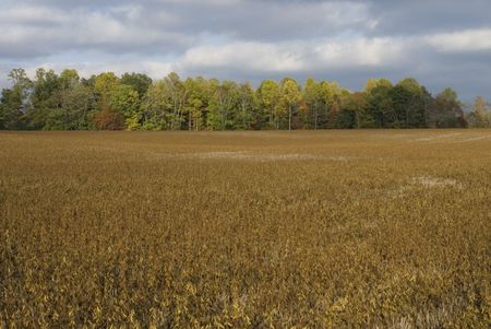 A view across a Tennesseee Soybean field.
