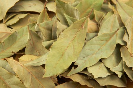 Spices - well dried up bay leaf