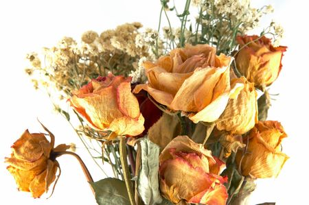 dried flowers on a white background Stock Photo