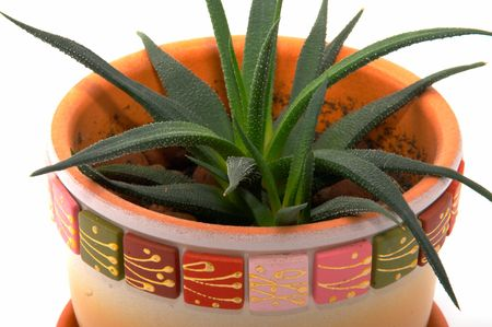 aloe vera leaves detailed on a white background