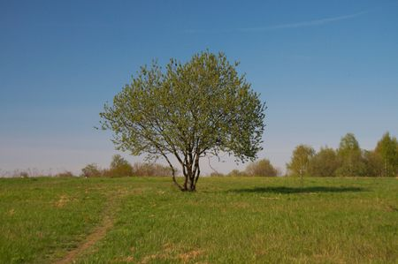 Tree on a background of a grass and the blue sky Stock Photo