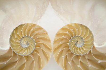 conchas: Primer plano de dos lados de una geometr�a concha reflexi�n refleja en la nieve Foto de archivo