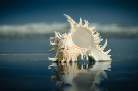 Beautiful relaxing seashell on the ocean beach in the sand water reflecting the sky with waves on vacation