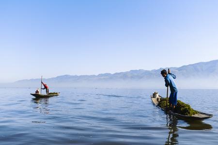 dugout: Farmers picking seaweed on the Inle Lake, Myanmar