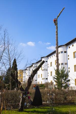 tree felling: Tree felling in housing area, Berlin, Germany