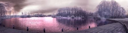 albero: Infrared landscape in the park of Milan in a winter afternoon