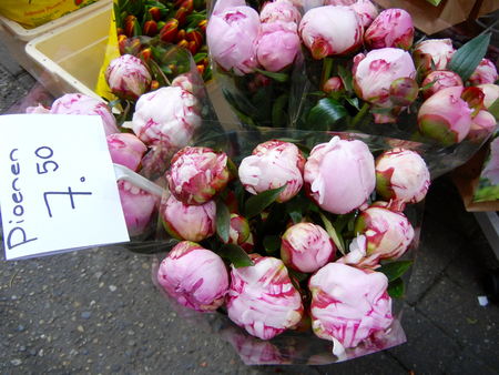 pfingstrosen: Pfingstrosen von Bloemenmarkt in Amsterdam Lizenzfreie Bilder