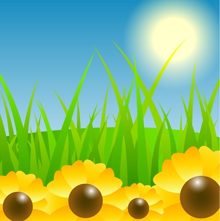 Sunflower field Stock Vector - 11703589