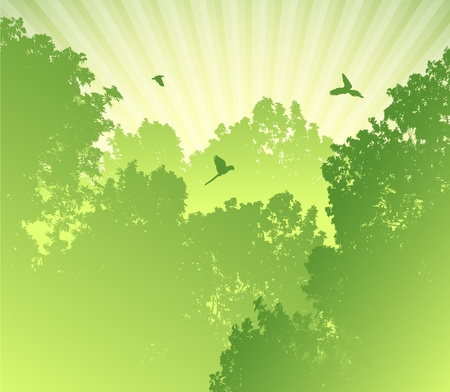 green parrot: Sunrise in tropical forest