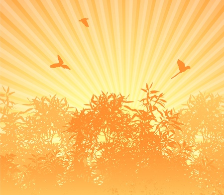 Sunrise in forest orange Vector