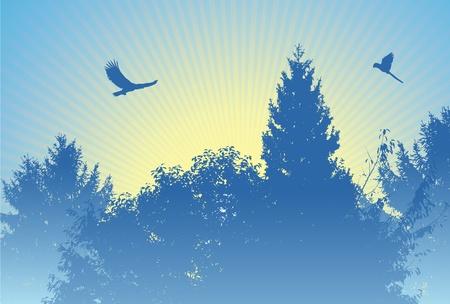 Sunrise in forest blue Stock Vector - 11703757