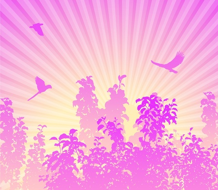 Sunrise in forest pink Vector