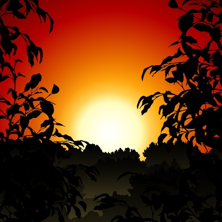 Sunset in Jungle Vector