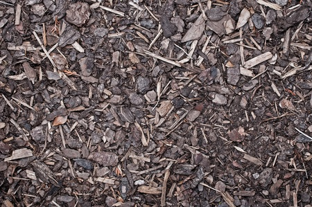 Mulch Bark on ground Texture photo