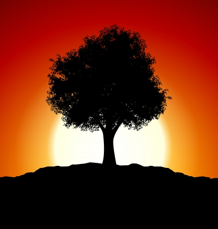 Sunset with black tree silhouette Vector