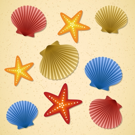 animal frame: Seashells and starfishes on beach