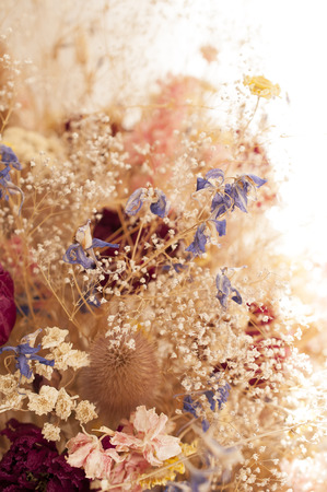 dried flowers: Dried flowers detail on white background