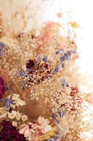 flores secas: Flores secas detalle en el fondo blanco