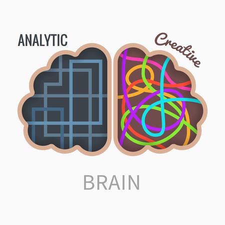 hemisphere: Two different brain hemispheres