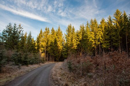 Road to the forest, sun is shine on tree tops and sky is blue with clouds