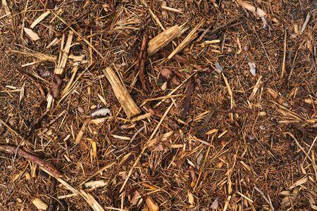 Bark chips, mulch on forest ground, texture background Banco de Imagens