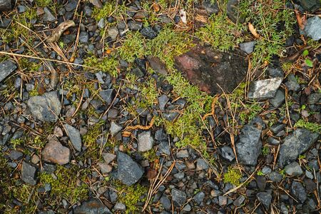 Stones, moss and needles, typical view on a forest ground