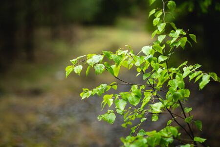 Young tree in the forest, fresh green in spring time Banco de Imagens