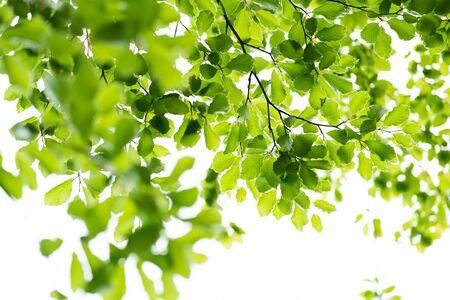 Green leaves against bright sky, fresh spring forest