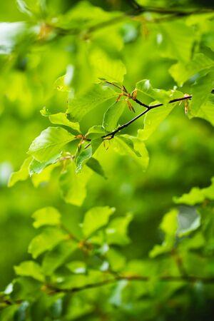 Green leaves against blur trees, fresh spring forest