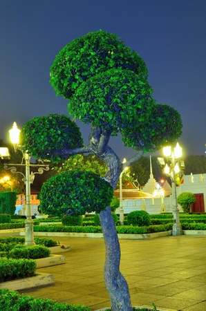 circle bonsai tree Stock Photo - 13026505