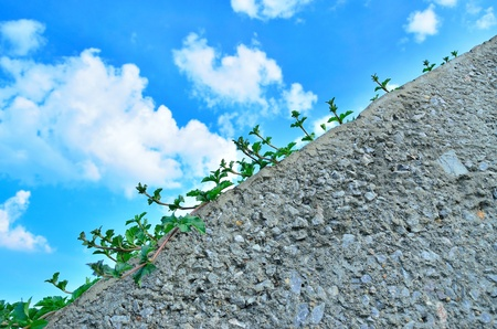 Small vegetation grow up on  the wall 1