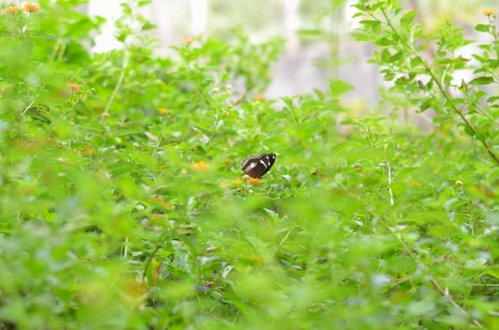 midst: one butterfly midst of trees