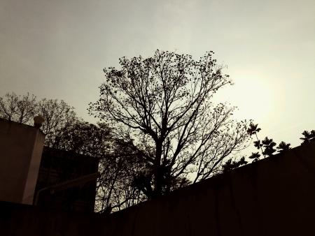 Los �rboles de la silueta en el cielo por la noche Foto de archivo